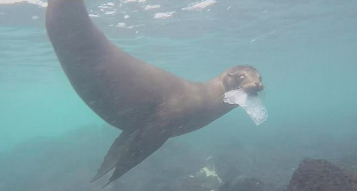 The Galapagos Islands, one of the most protected areas on Earth, are now facing a plastic pollution problem even though 97 percent of the islands are off limits to humans.
