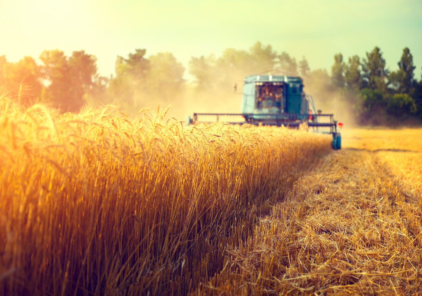 Experts found evidence to support the theory that agriculture commenced in times of surplus, when human populations were more concentrated, and when environmental conditions were improving.