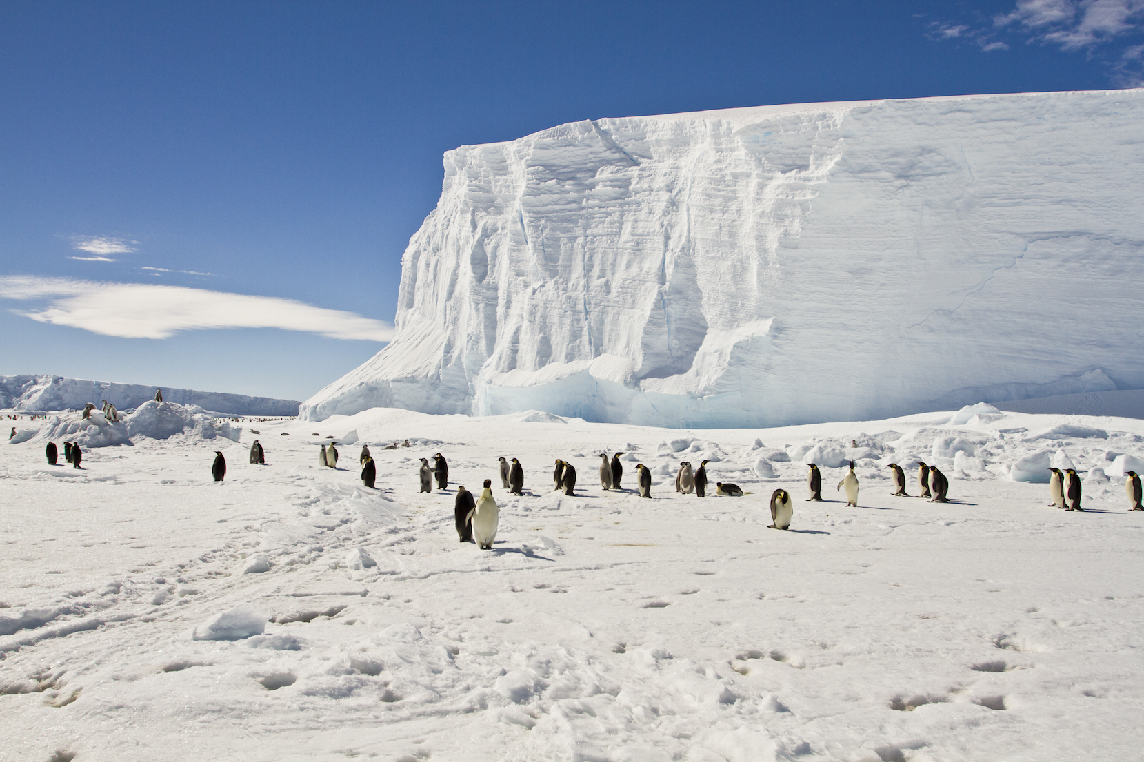 There have just been eight recorded seismic events since the first ever earthquake in East Antarctica was detected in 1982, but everything changed when a team set up an array of instruments that recorded seismic activity in 2009.