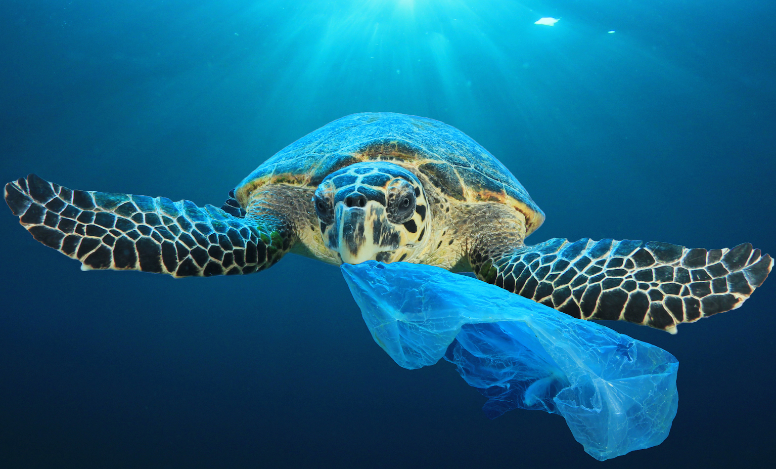 The United Nations (UN) released a report that found that less than one-tenth of all the world's plastic has been recycled and calls for immediate government intervention to ban or tax single-use plastic bags and food packaging.
