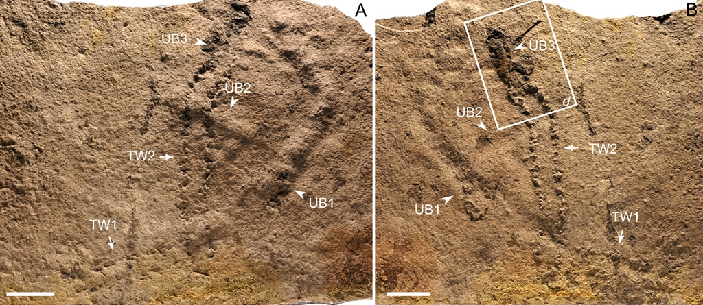 Researchers may have uncovered the oldest fossil footprints on record, dating back to the Ediacaran Period 600 million years ago, in China.