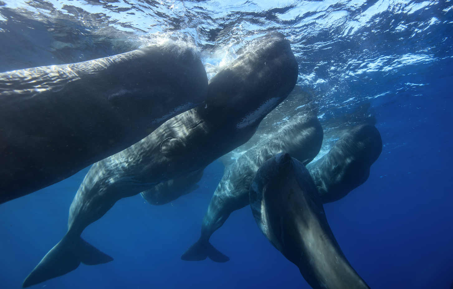 A new study suggests that we should add marine mammals to the list of animals that form such strong bonds with their herds, pods, and family that they grieve and mourn their dead.