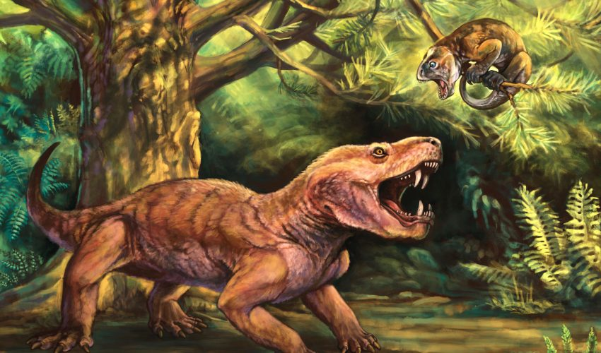 Two new species of ancient saber-toothed predators discovered