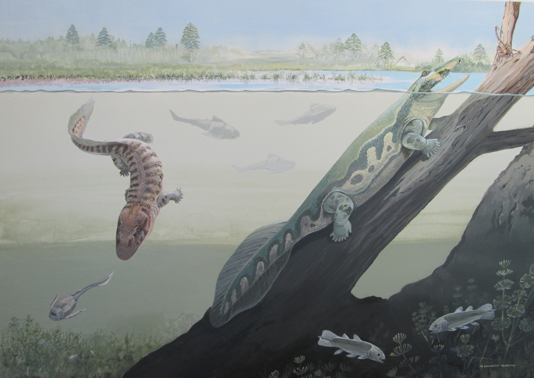 Previous fossil evidence had led researchers to believe tetrapods evolved and existed primarily in tropical regions. But a new finding shows that they were widespread, and even inhabited the Antarctic Circle.