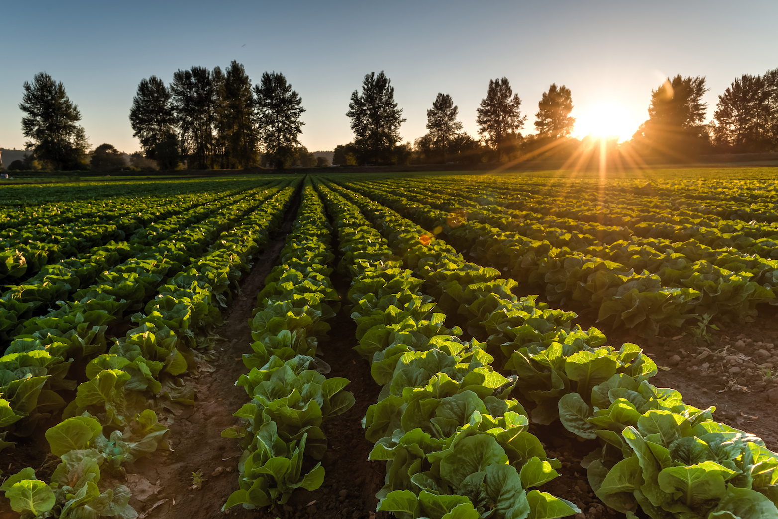 If nothing is done to mitigate climate change and reduce emissions, vegetable crop yields could be reduced by 35 percent, and legumes by nine percent towards to the end of the century.