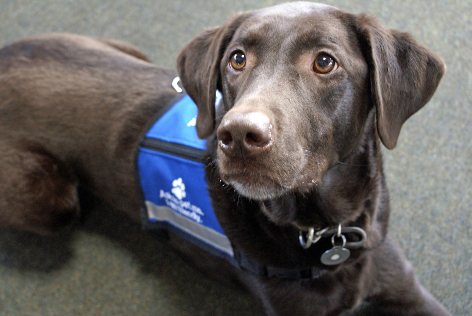 A new study from the Purdue University College of Veterinary Medicine has demonstrated that veterans who are suffering from post-traumatic stress disorder (PTSD) can benefit physiologically from the company of service dogs.