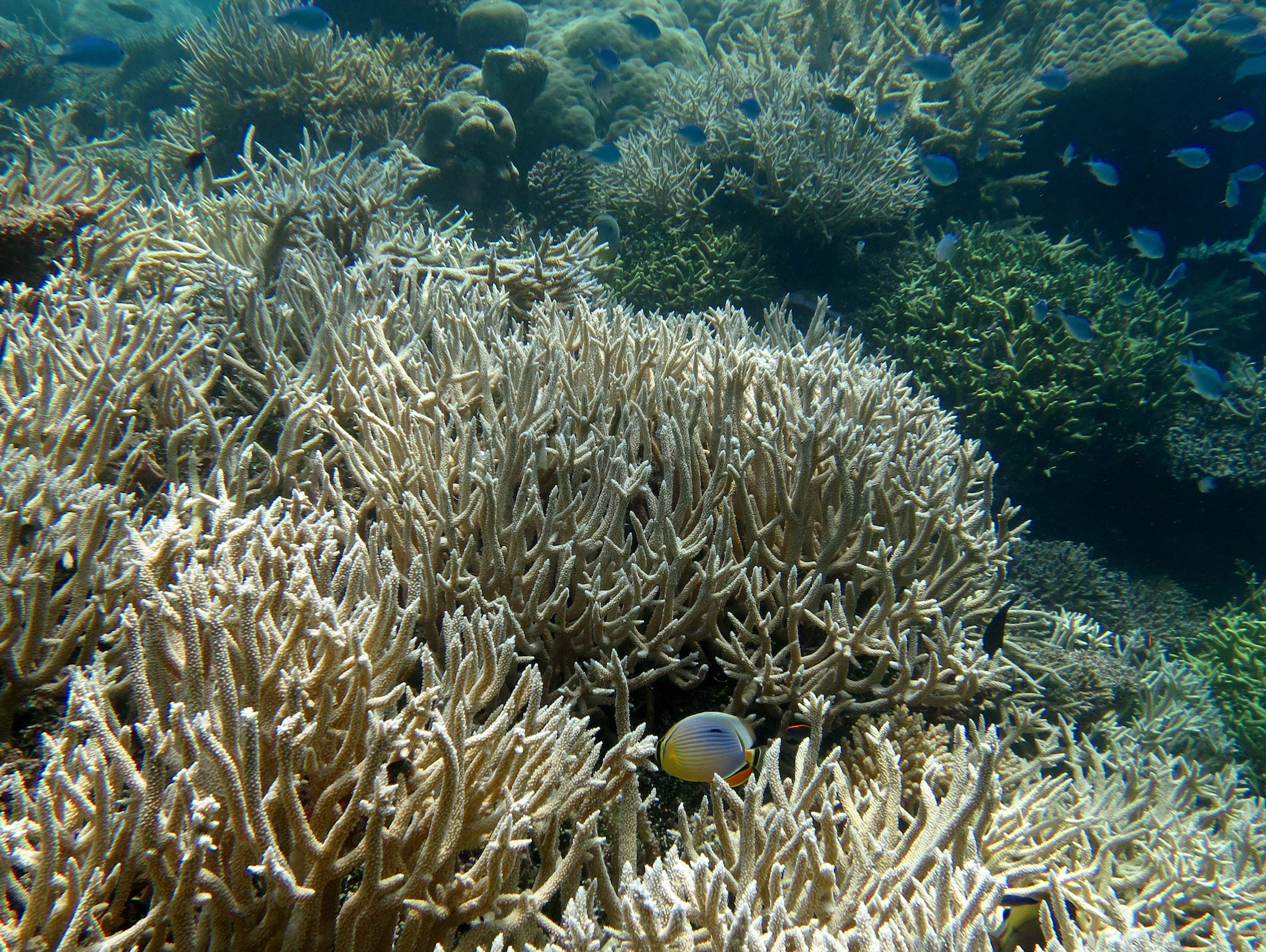 A new study has found that sea level rise poses yet another threat to coral growth, health, and preservation.