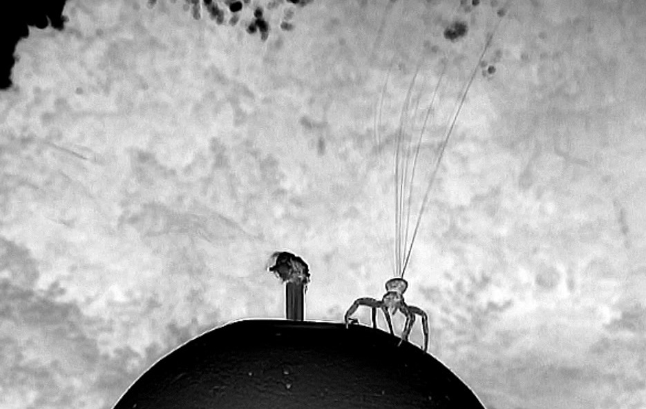 Researchers have discovered how some spiders take flight after gauging wind conditions and spinning out tiny nanoscale fibers.