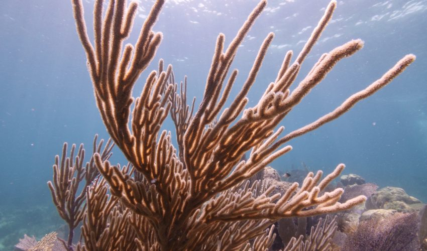 The Coral Restoration Foundation (CRF) is working to restore the Florida Reef Tract, a vital and vibrant ecosystem.