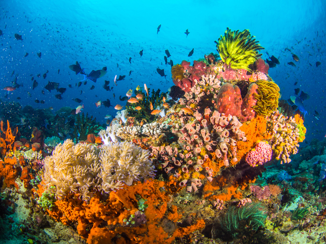 Marine reserves can only do so much to protect reefs, but a new study has found that even some protection is better than no protection.