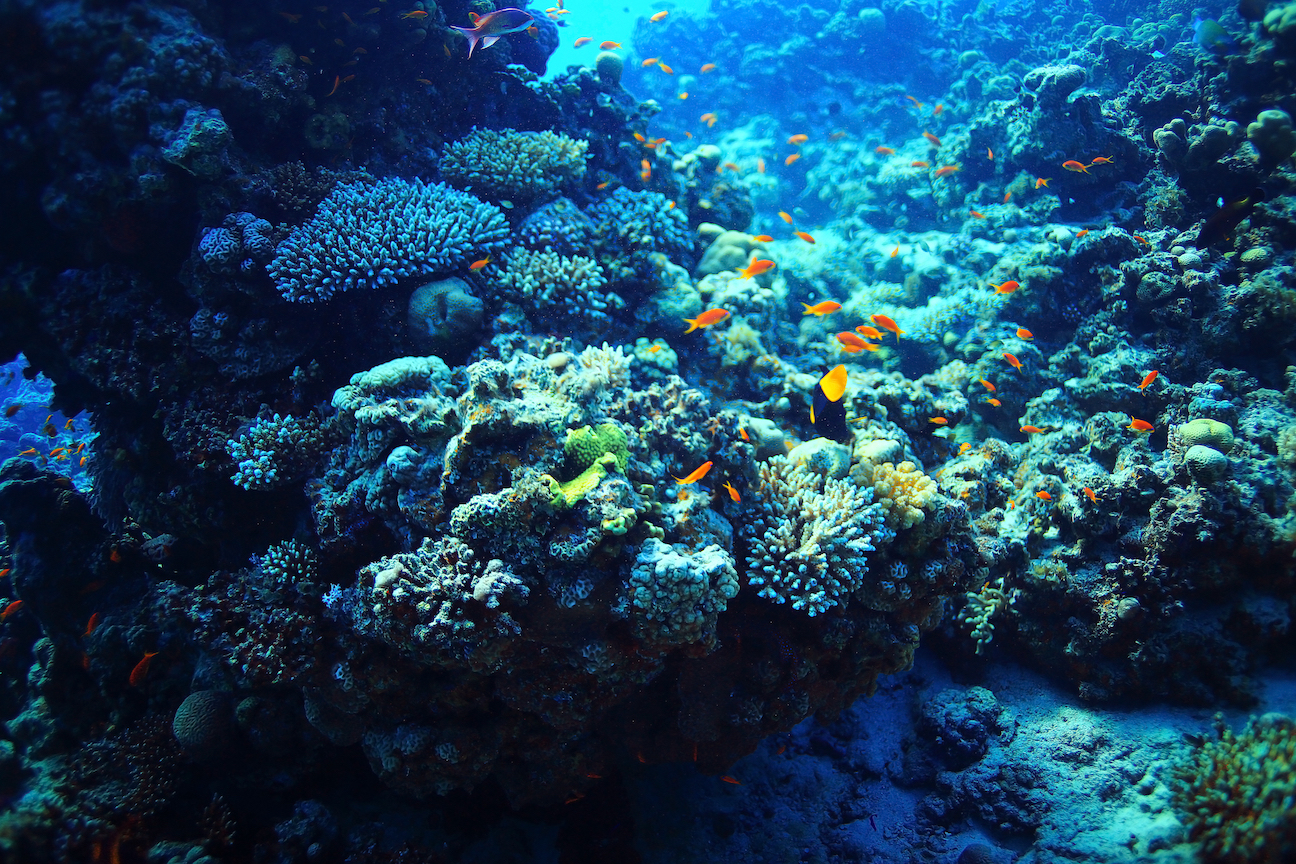 """The world's coral reefs are in jeopardy, but a new study examining """"reef oases"""" offers hope for potential reef recovery and sustainability."""