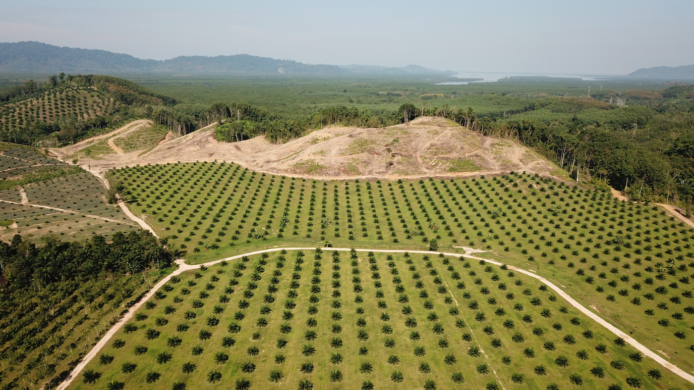 Thousands of hectares of rainforest are cleared each year to meet the growing global demand for palm oil.