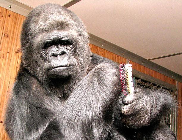 Koko the gorilla, famous for her sign language skills, died at age 46 in her sleep, according to the Gorilla Foundation.