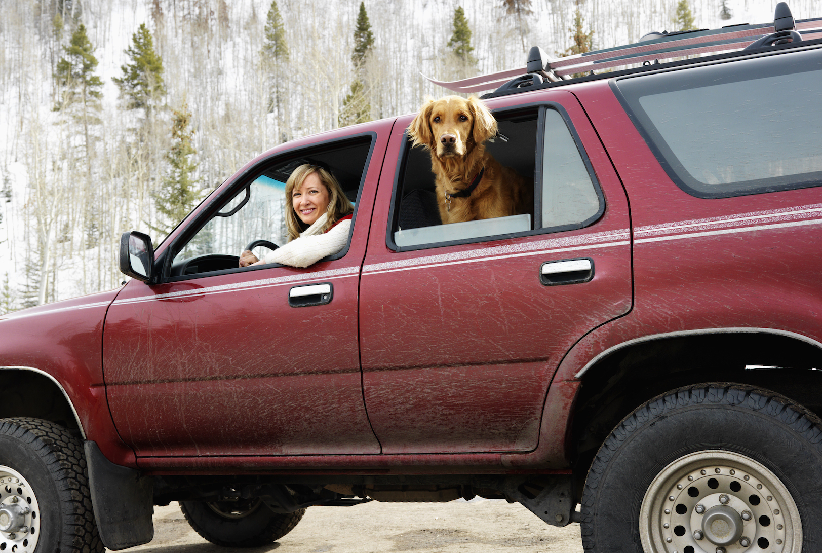 A new study has revealed that allowing dogs to jump from the back of large vehicles can cause serious damage to their joints.
