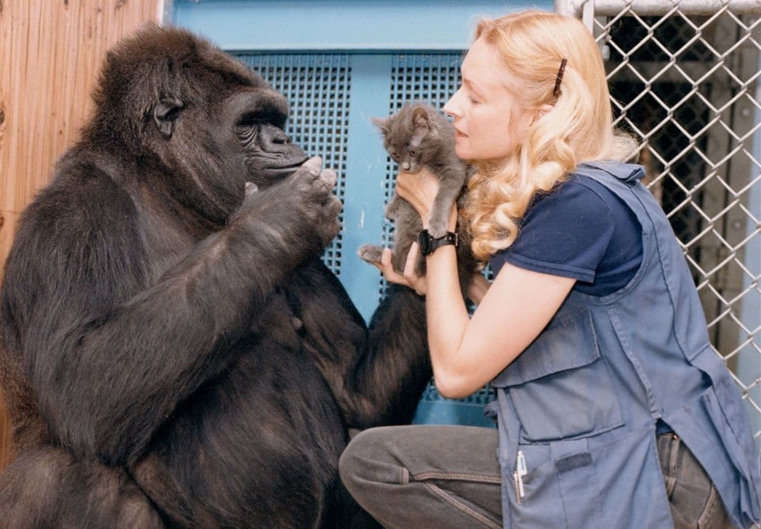 Not only did Koko know over 1,000 signs, but she also showed a broad range of emotions, previously only assumed to be held by humans.