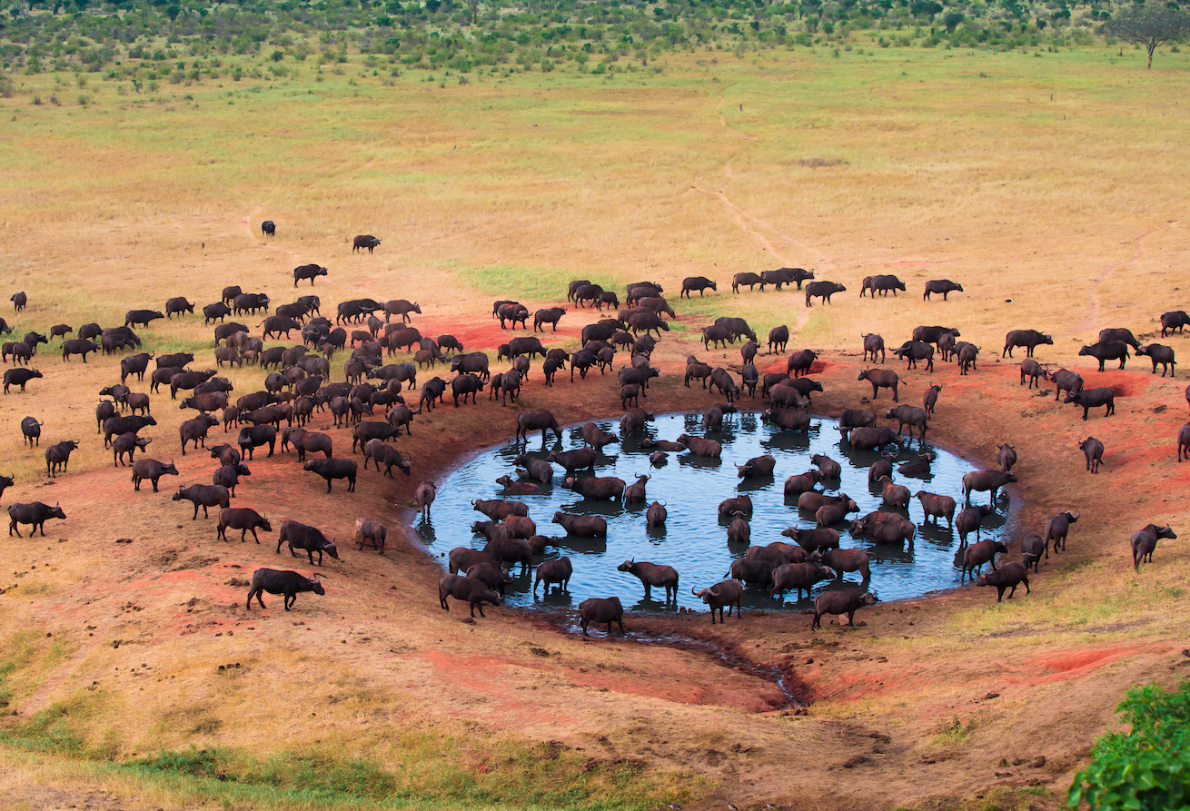 Dry conditions can increase the spread of disease, where sick animals behave differently than those in wetter environments.