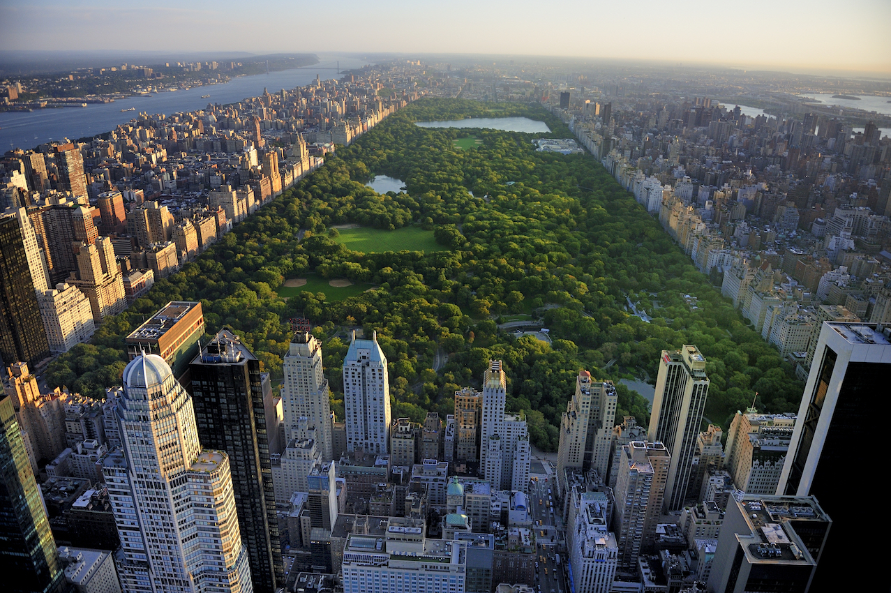 New research from University College London found that urban forests can store as much carbon as tropical rainforests.