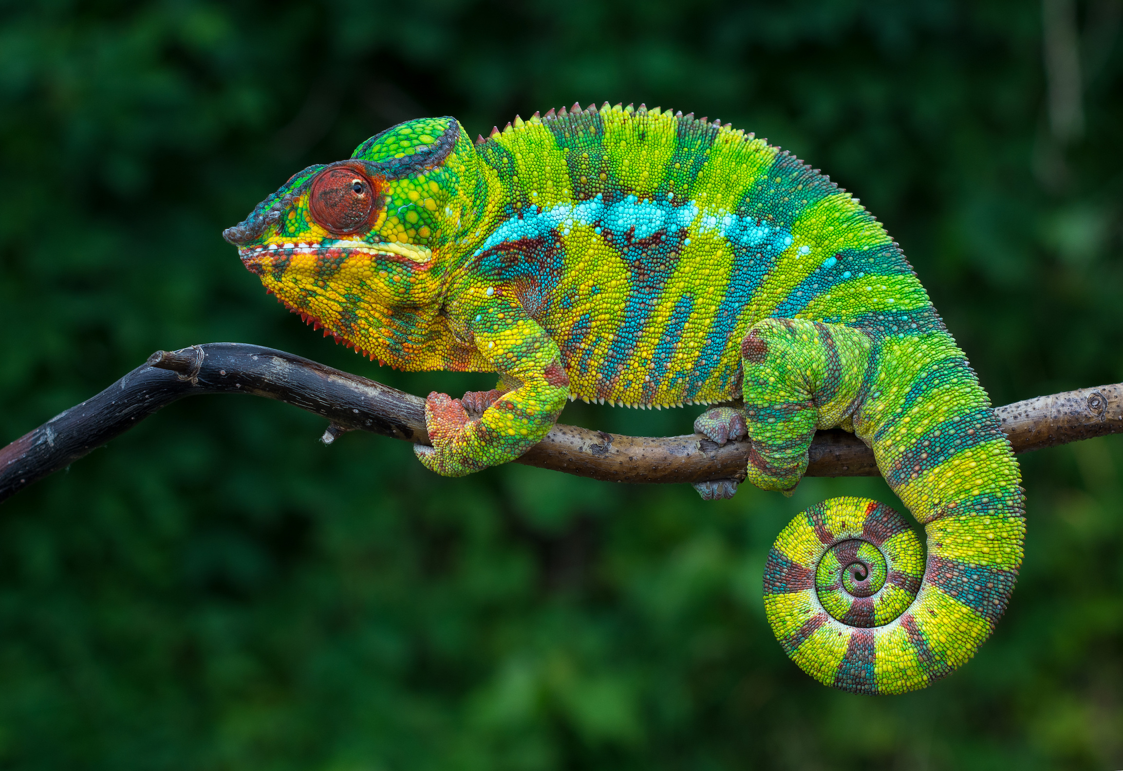 Researchers at Nagoya University have developed a composite material that can mimic the vibrant color changes of chameleons.