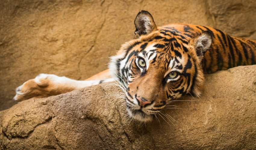 While we prepare our homes and even pets for natural disasters, zoo animals should also be a priority when planning for the worst.
