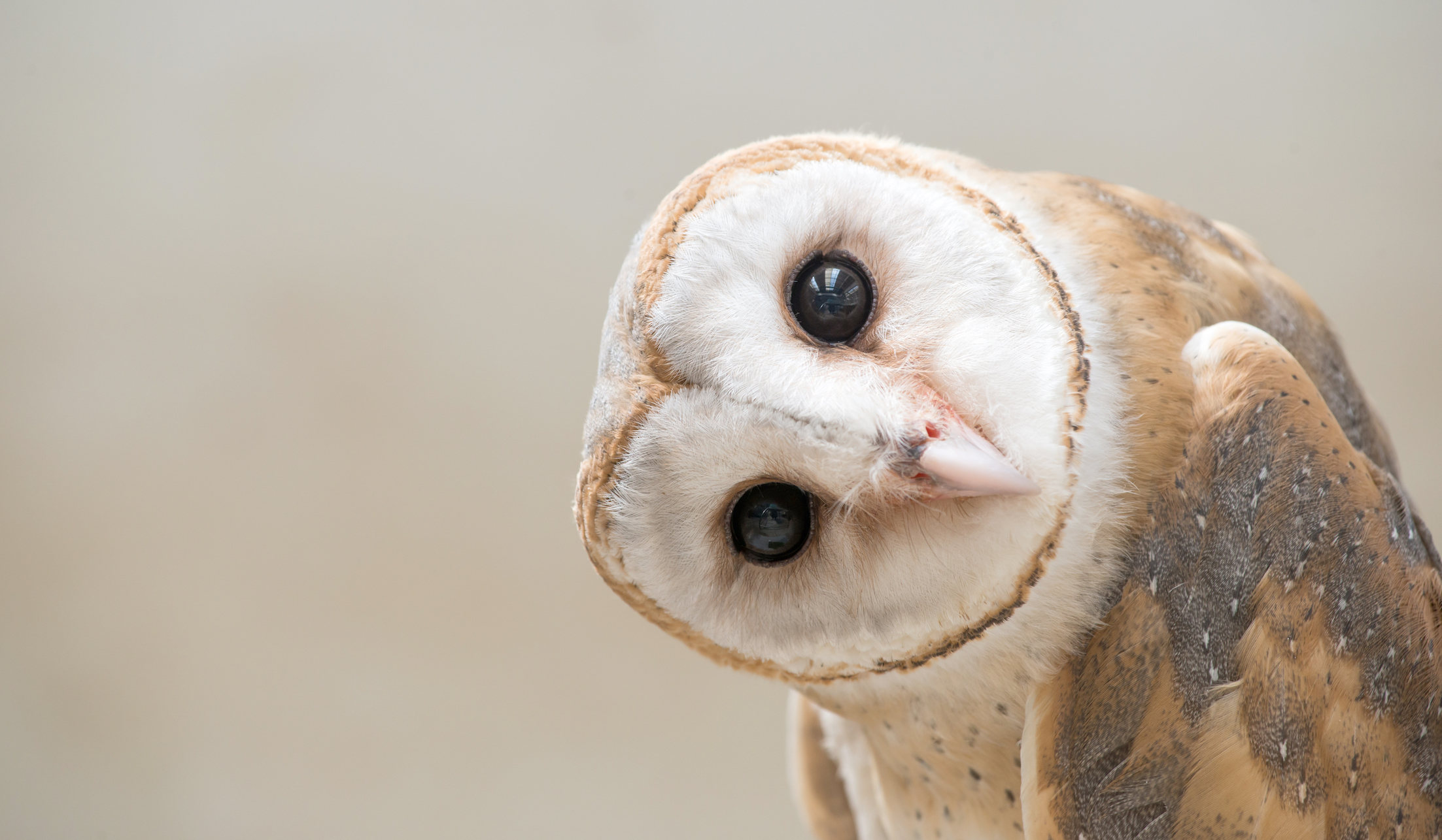 A new study suggests that humans and owls process visual details in a much more similar way than what was previously realized.