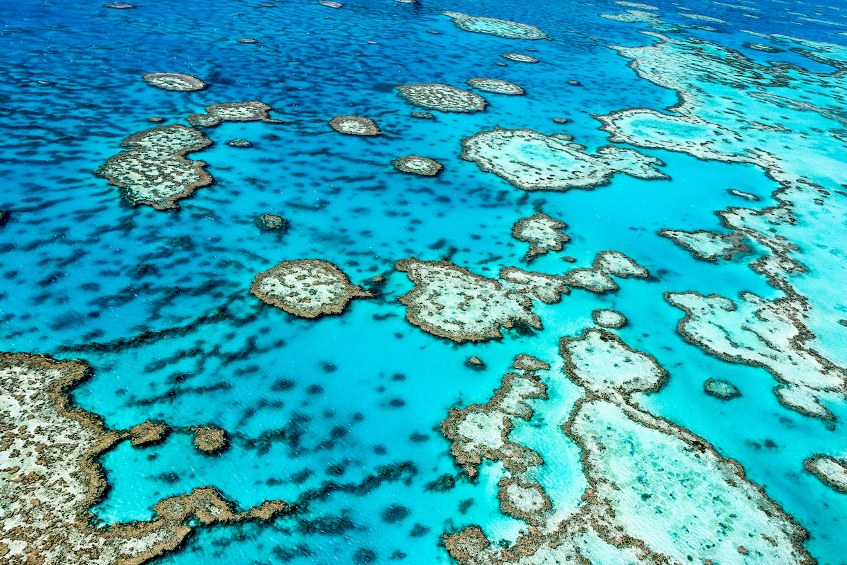The Great Barrier Reef could experience devastating bleachings every two years, a rapidly increased rate compared to current bleachings.