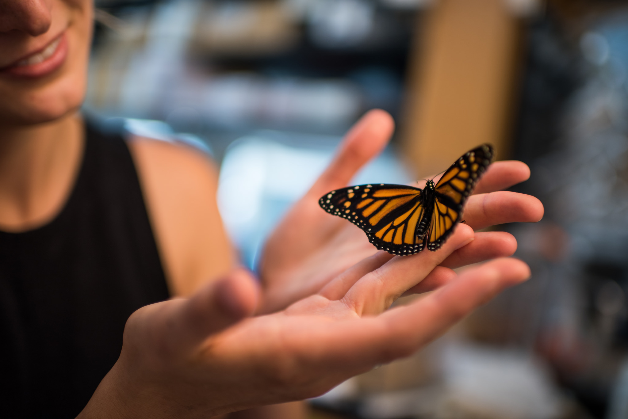 Rising carbon dioxide levels diminish the medicinal properties of milkweed plants, which make the butterflies more resilient against disease.