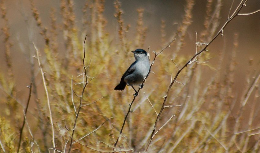 A new study has revealed that the preferences of birds should be considered for the successful restoration of habitats.