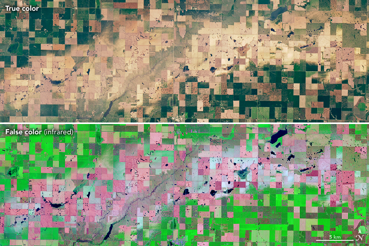 Today's Image of the Day from NASA Earth Observatory shows the hail scars just north of Onida, South Dakota, after the region's croplands were annihilated by hailstorms.
