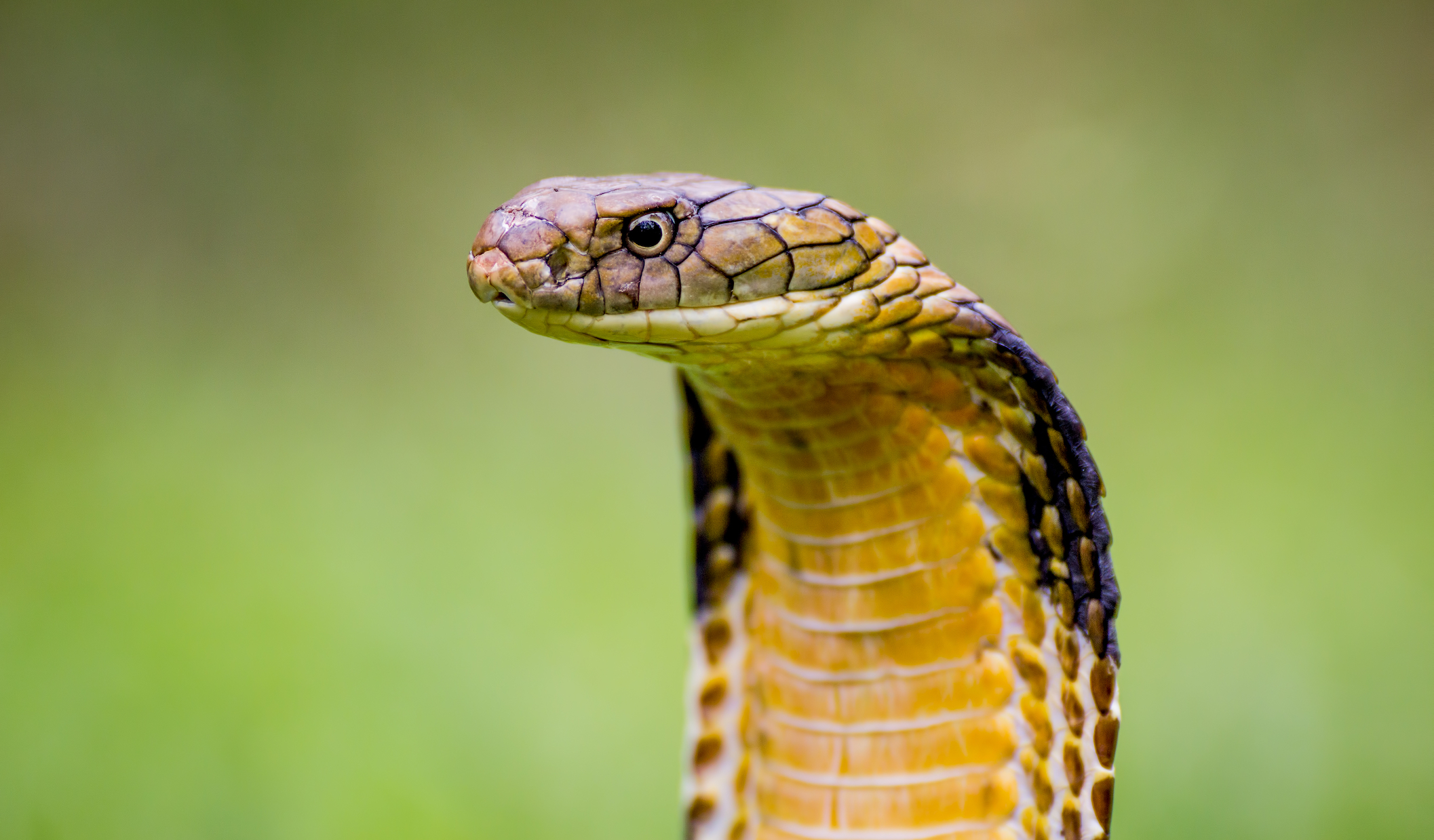 93 million people in the world have a greater risk of dying from snake bites because they can't get proper care.