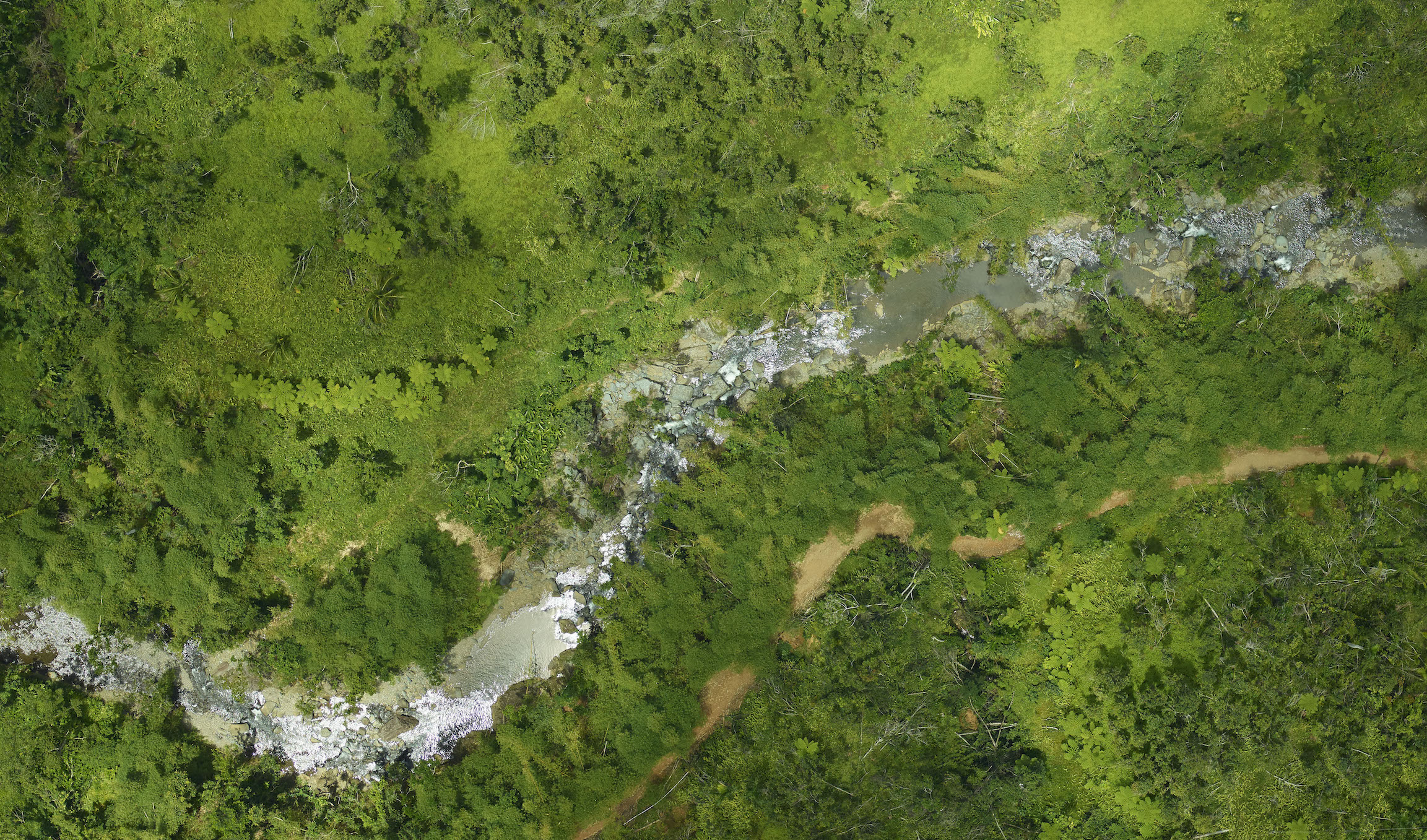 Images Reveal Extent Of Hurricane Damage To Puerto Rican Forests