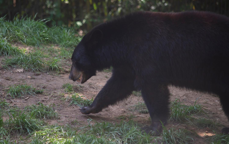 A man from Louisiana was hunting last November when he fatally shot a four-year-old Louisiana black bear.