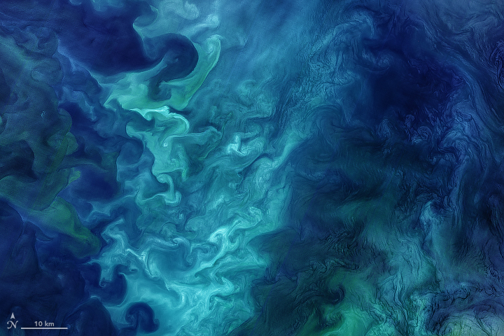 Today's Image of the Day from NASA Earth Observatory features the stunning colors produced by blooms of phytoplankton in the Chukchi Sea off the coast of Alaska.