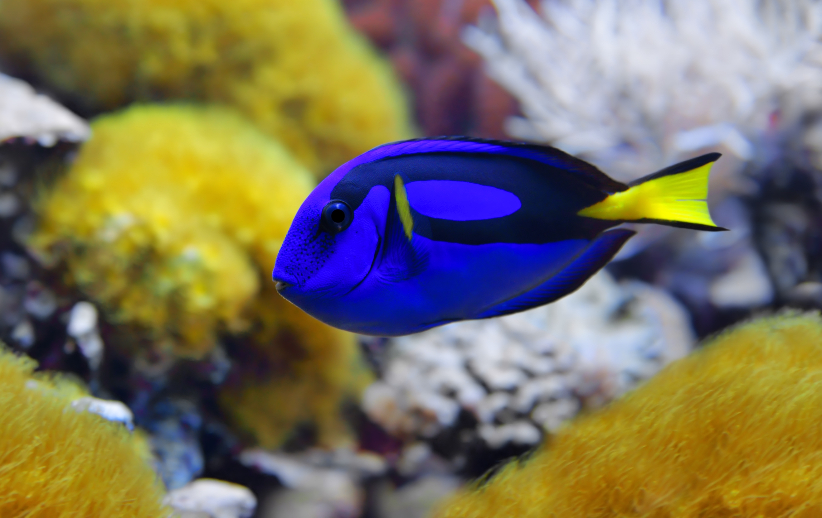 Fish cognition: Why Dory isn't as dumb as she seems • Earth.com