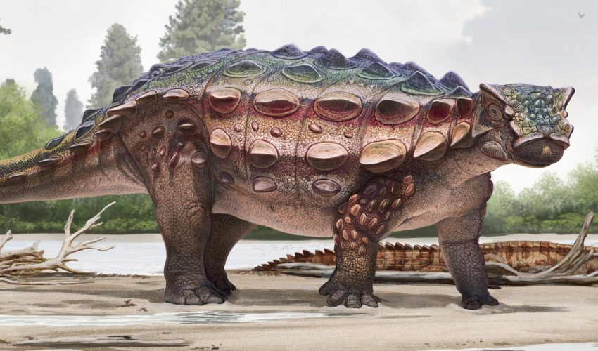 New Armoured Dinosaur Found In US Evolved From Asian Ancestors