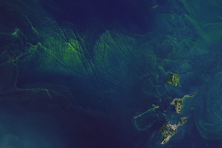 Today's Image of the Day from NASA Earth Observatory shows the striking green colors of phytoplankton blooms against the deep blue water of Lake Okeechobee in Florida.