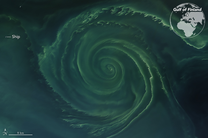 Today's Image of the Day from NASA Earth Observatory features a distinctive phytoplankton bloom in the Gulf of Finland.