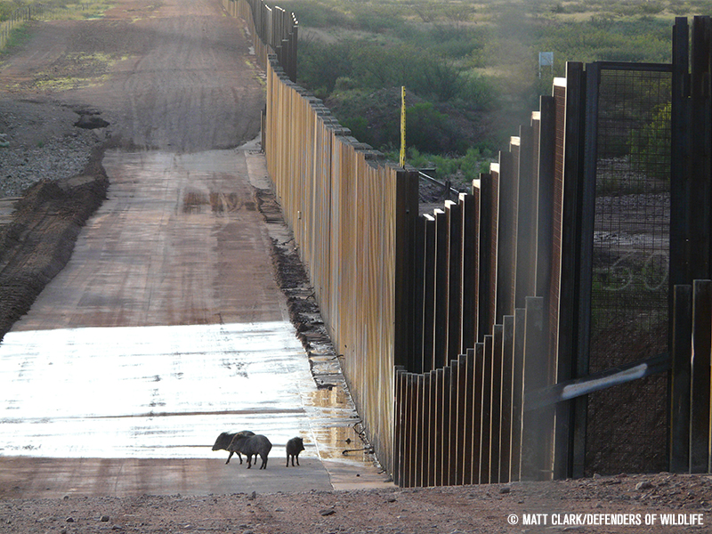 A new paper describes the threats that the wall would pose to biodiversity and the harm it could do to the species that call the area home.