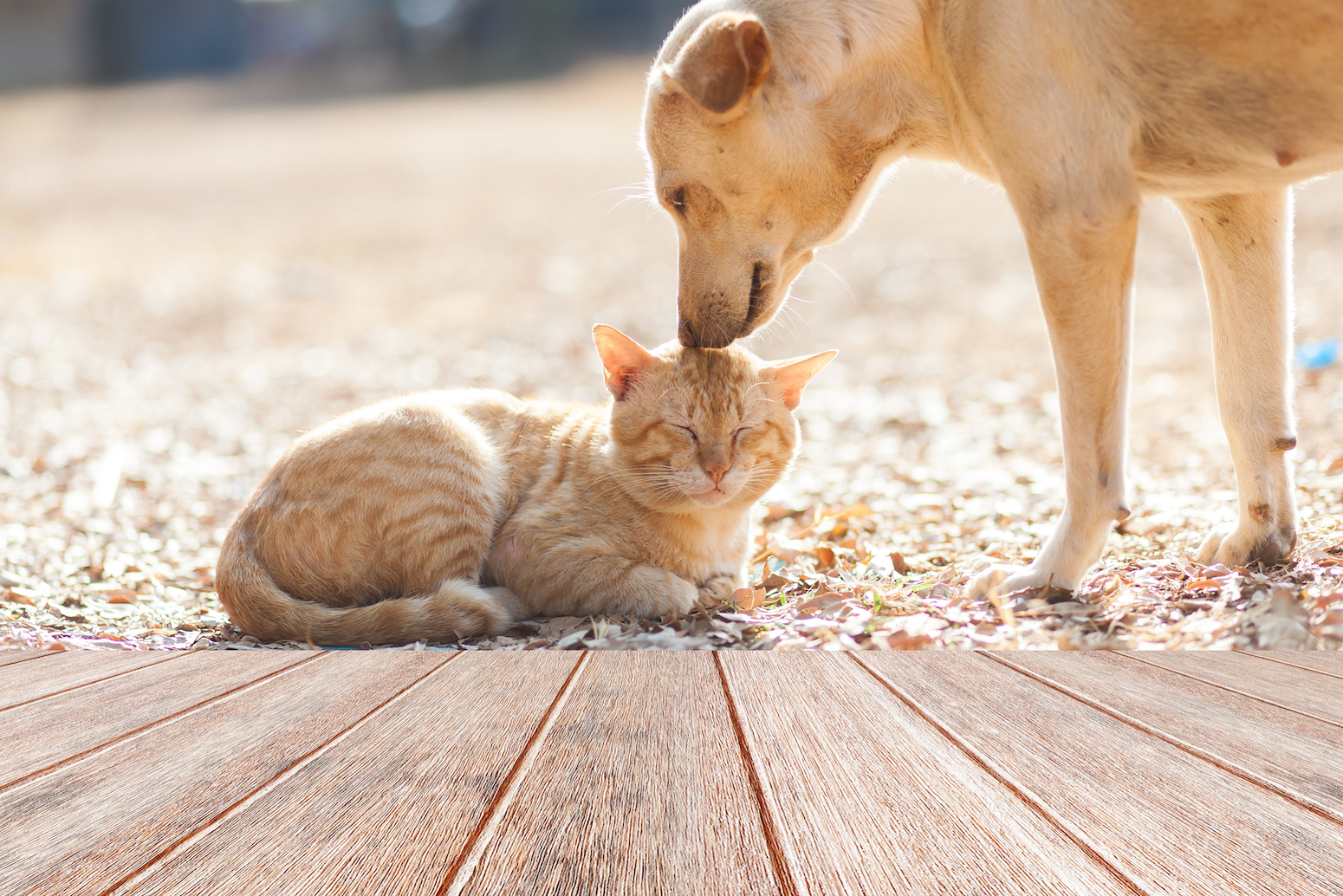 While it might seem that dogs hold all the power in a household, a new study reveals that cats are actually in charge.