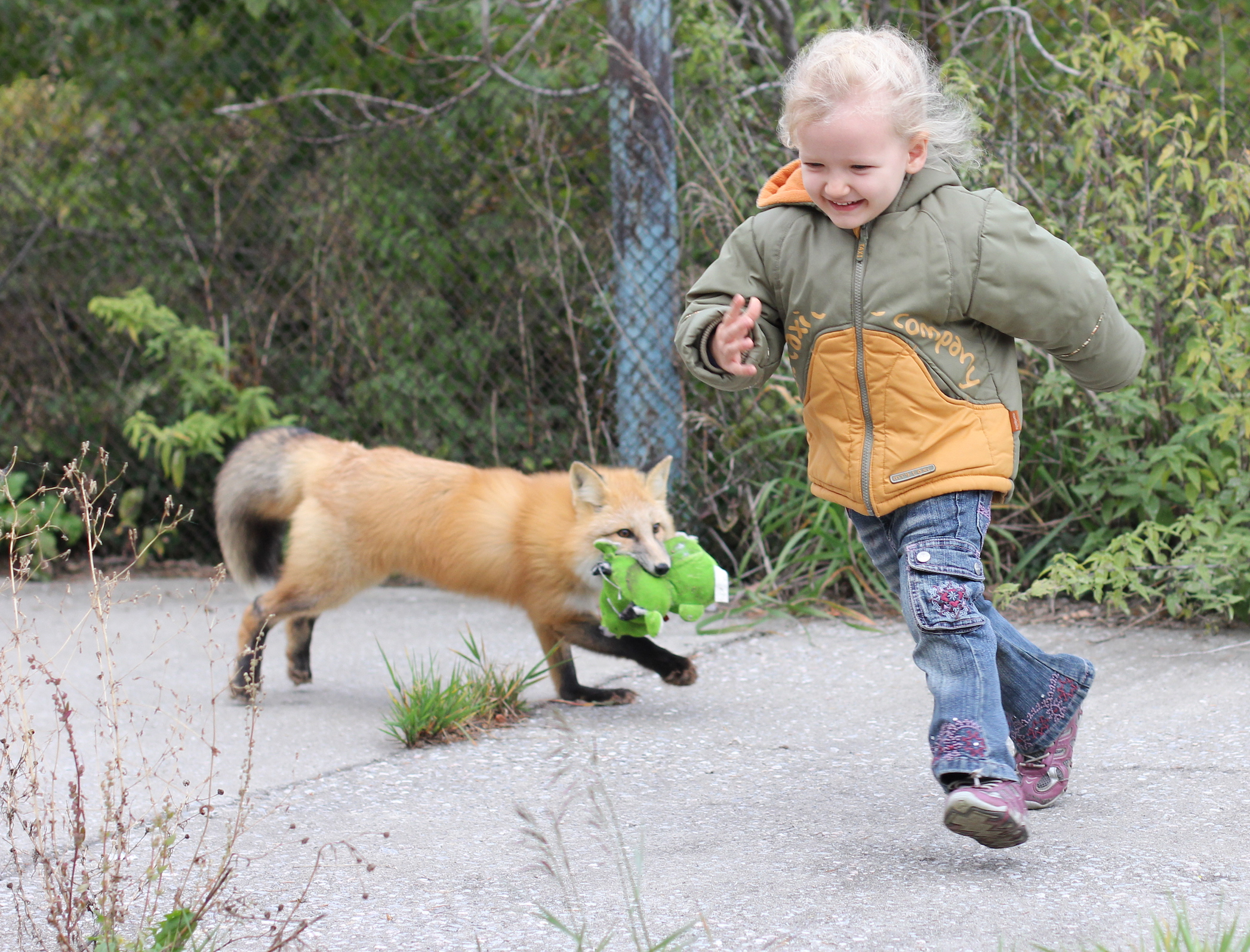 The first-ever publication of the fox genome will help scientists to understand the genetic basis of their behaviors.