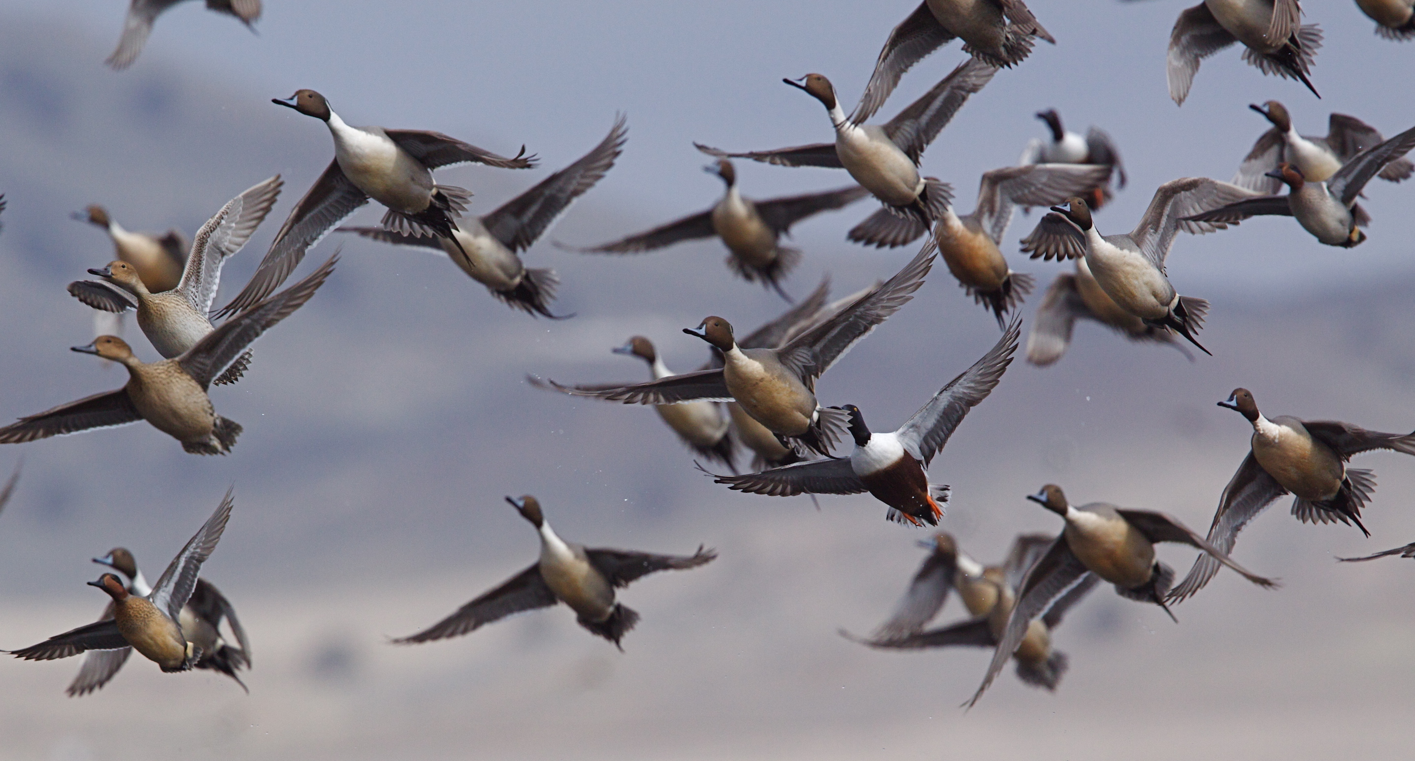 Mixed species foraging flocks are exactly what they sound like: groups of birds of different species who forage for food together.