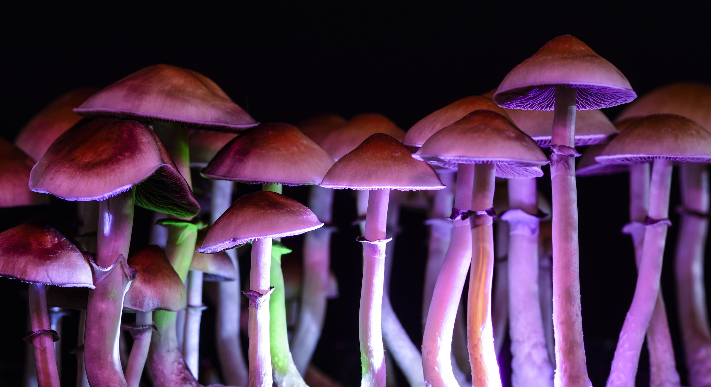An intervention with psychedelic mushrooms may help some people overcome their tobacco addiction, according to a new study.