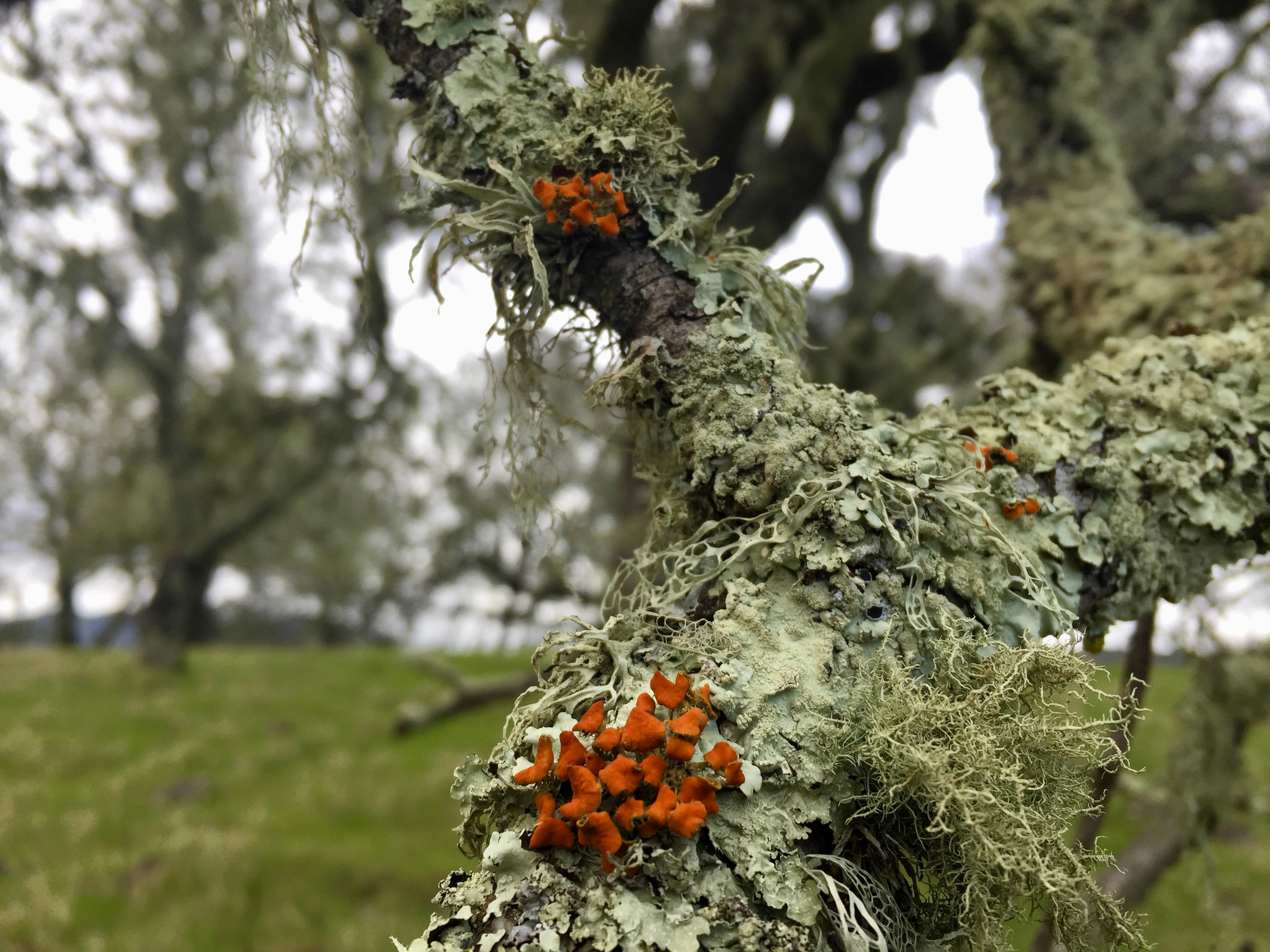 New research has found that lichen communities, which are essential to life across conifer forests, are not always returning after wildfires.