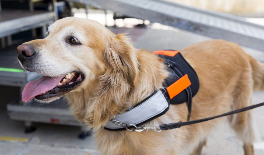 The rise in popularity of emotional support animals is causing logistical problems everywhere from airlines to colleges and courtrooms.