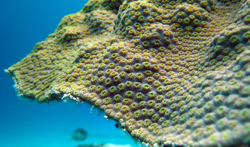 Corals and the algae that enable them to construct reefs have relationships that are much older than what was previously realized.