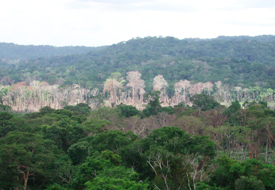 Researchers now have a better idea of the scope and magnitude of how drought impacts the Amazon rainforest.