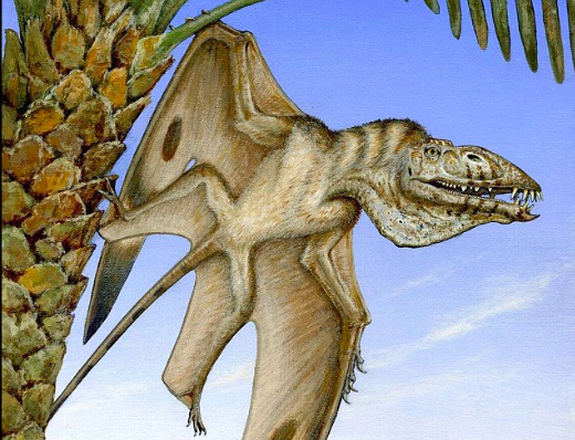 The remains of a new species of pterodactyl from 200 million years ago have been discovered in the desert of Utah.