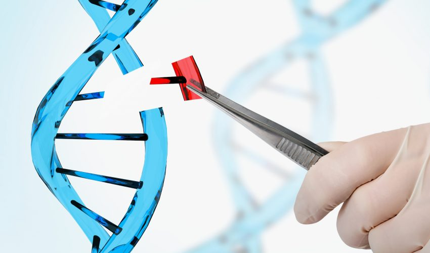 A new study has found that Americans' views of possible uses of genetic engineering in animals vary based on the intended purpose.