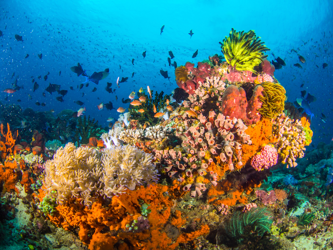 Researchers found that some corals and sea anemones regulate their gene expression to help adapt to extreme environmental changes.