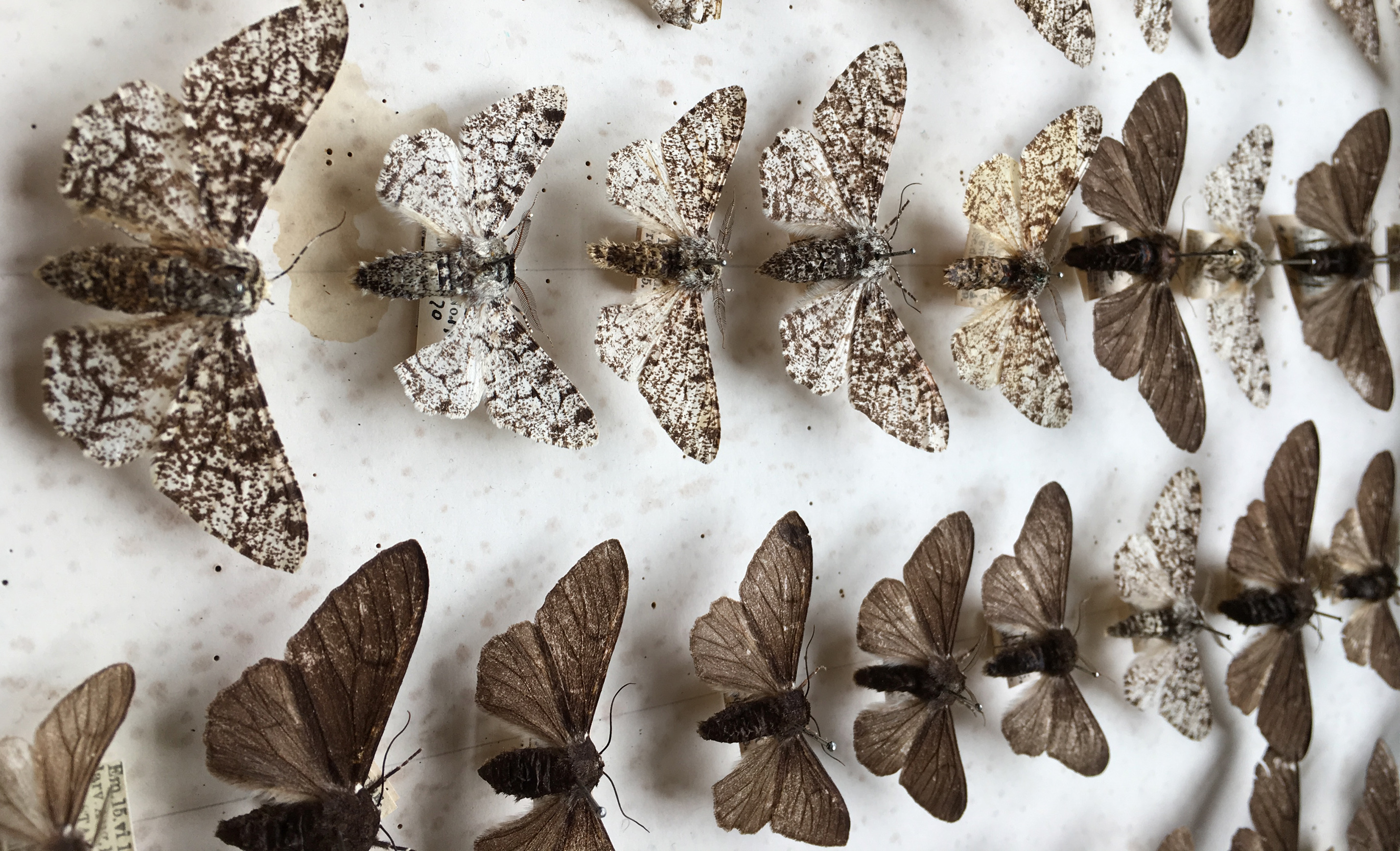 Pale moths are safer when there is less pollution, while darker moths have a better chance when the air is polluted.