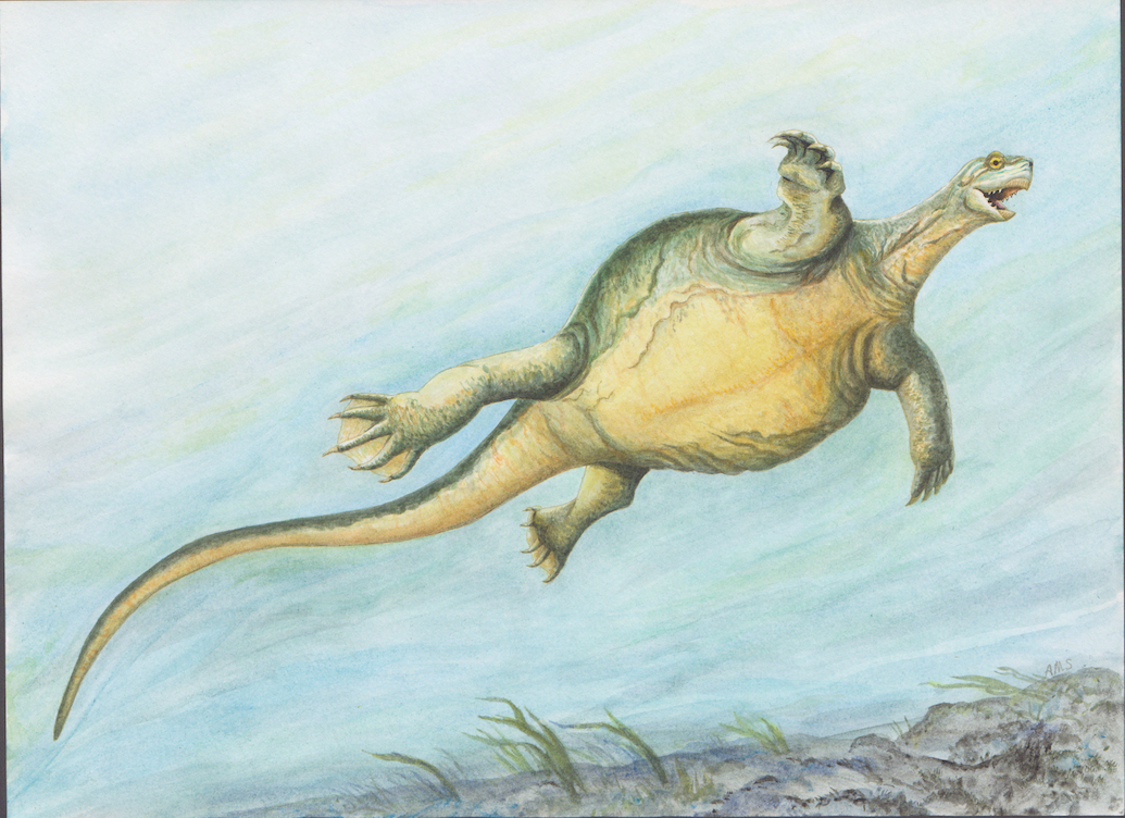 A newly-discovered fossil from 228 million years ago shines light on how turtles developed their signature traits.